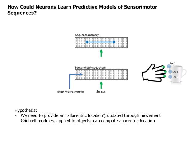 How Could Neurons Learn Predictive Models of Sensorimotor Sequences? Sequence memory Sensorimotor sequences SensorMotor-re...