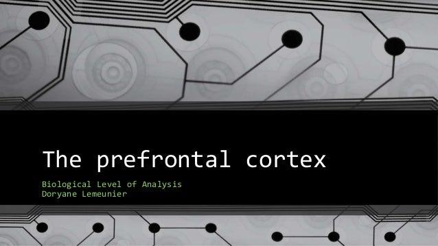 The prefrontal cortex Biological Level of Analysis Doryane Lemeunier