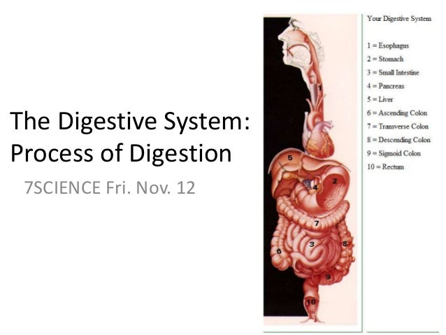 The Digestive System: Process of Digestion 7SCIENCE Fri. Nov. 12