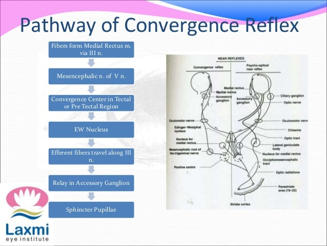The pupillary pathway and its clinical aspects