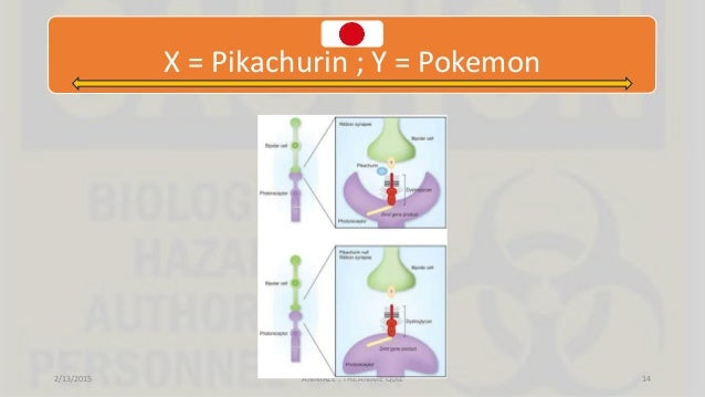X = Pikachurin ; Y = Pokemon 2/13/2015 ANIMAZE : THE ANIME QUIZ 14