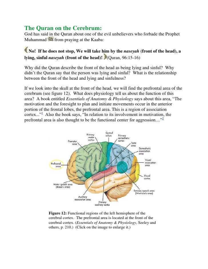 The Quran on the Cerebrum:God has said in the Quran about one of the evil unbelievers who forbade the Prophet Muhammad fr...