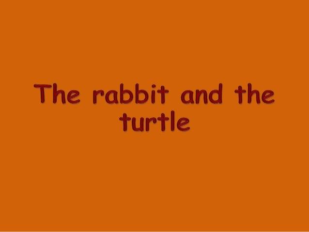 rabbit turtle