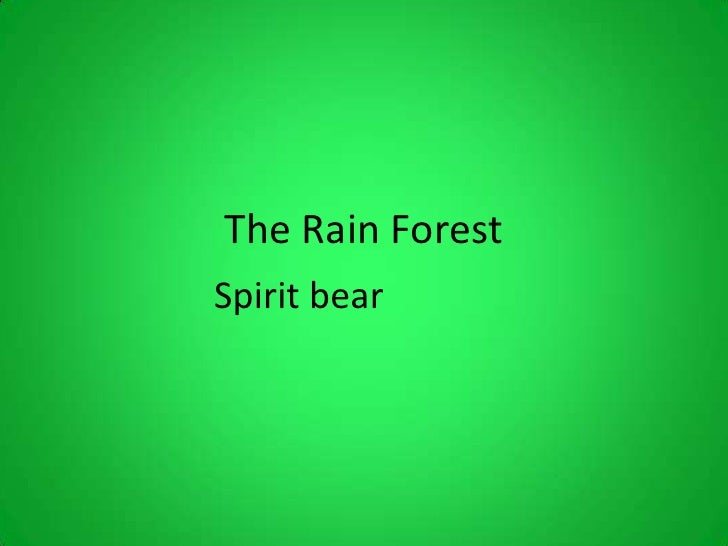 The Rain ForestSpirit bear