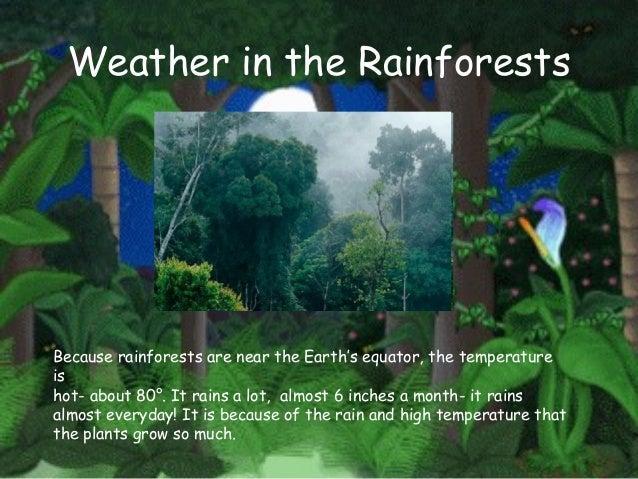 Major Rainforest Regions