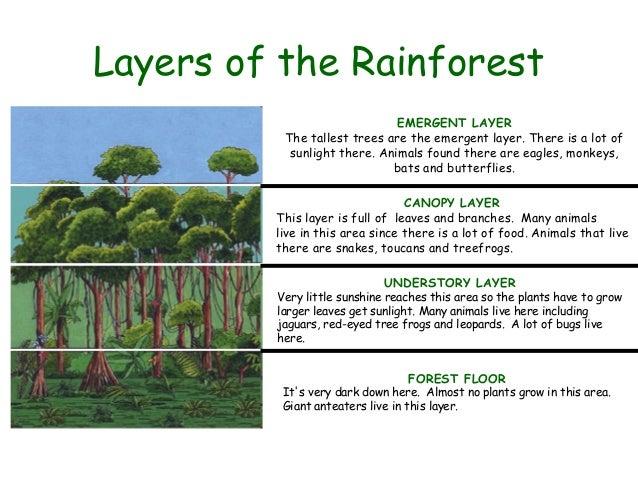 food tree diagram