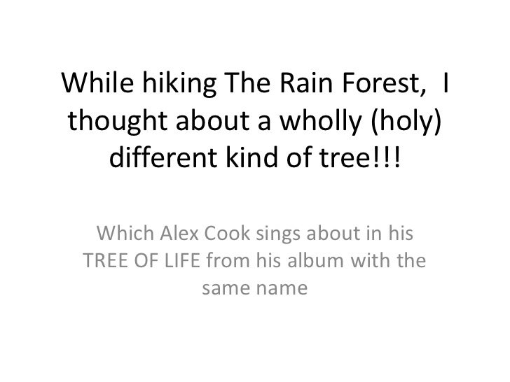 While hiking The Rain Forest, Ithought about a wholly (holy)   different kind of tree!!!  Which Alex Cook sings about in h...