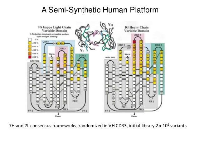 Therapeutic Antibodies 5 Humanization