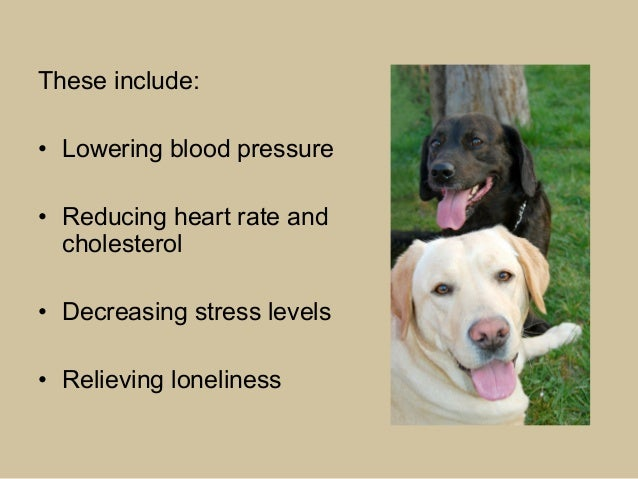 Best Dogs For Animal Assisted Therapy