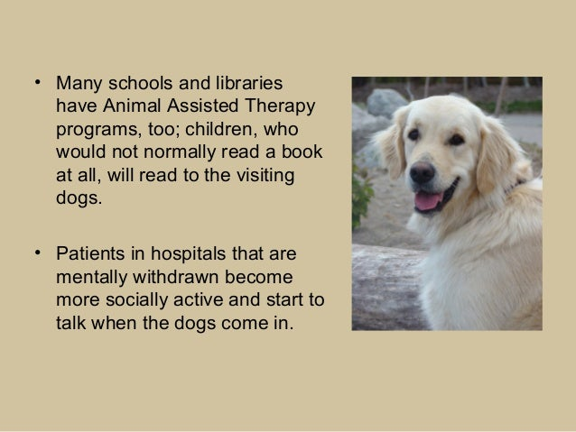 how to get a therapy animal