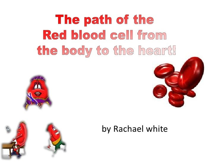 The path of the <br />Red blood cell from <br />the body to the heart!<br />by Rachael white<br />