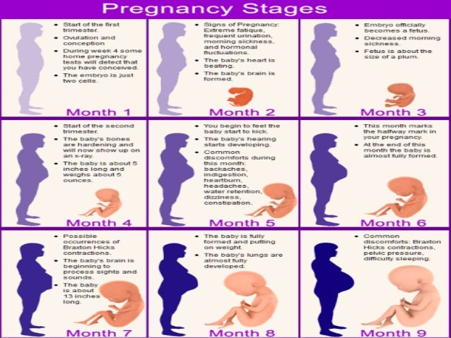 stages of pregnancy Associated terms for pregnancy are gravid and parousgravidus and gravid come from the latin for heavy and a pregnant female is sometimes referred to as a gravida gravidity is a term used to describe the number of times that a female has been pregnant similarly, the term parity is used for the number of times that a female carries a pregnancy to a viable stage.