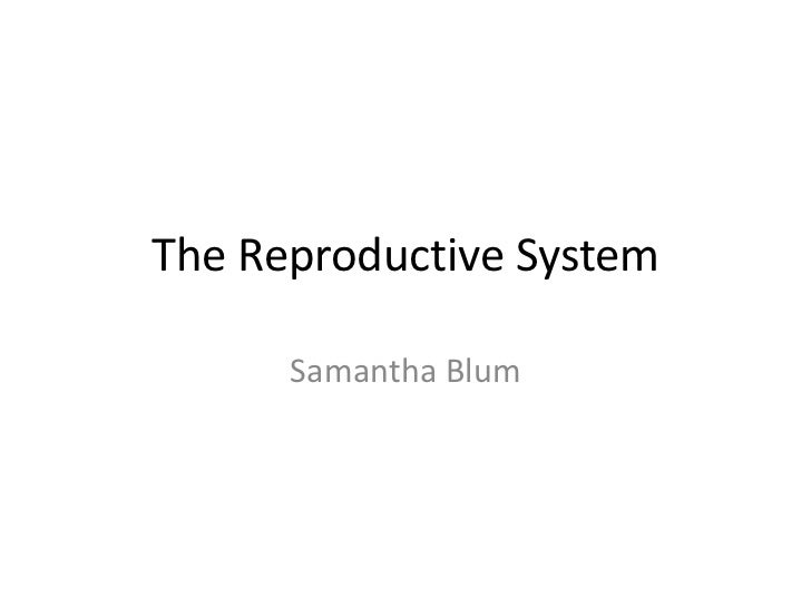 The Reproductive System      Samantha Blum