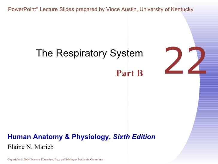 22 The Respiratory System Part B