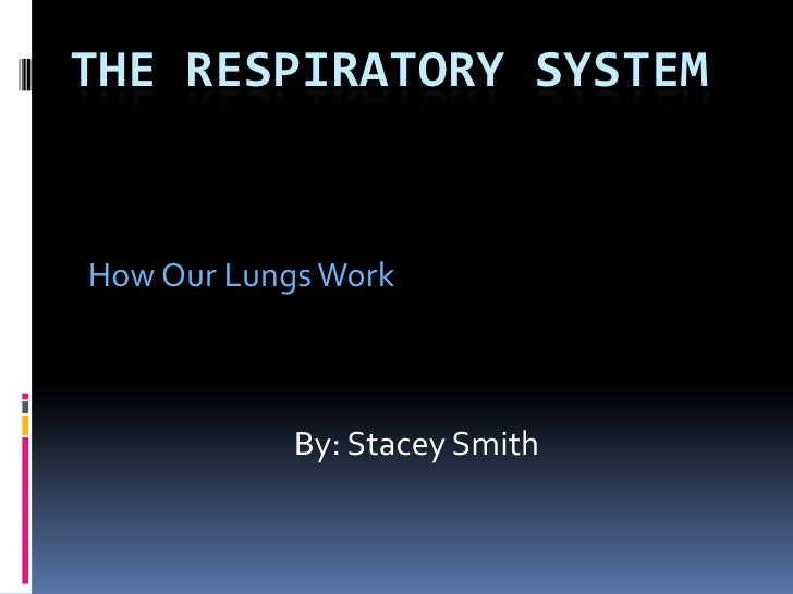 The Respiratory System<br />How Our Lungs Work<br />By: Stacey Smith<br />