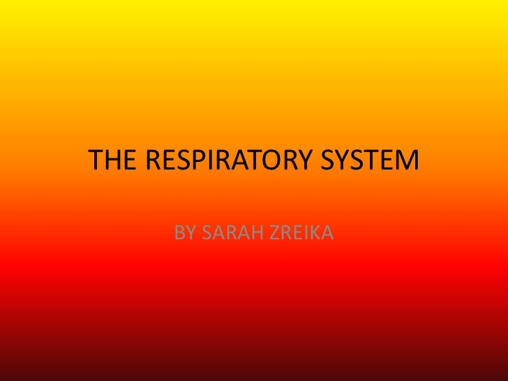 THE RESPIRATORY SYSTEM <br />BY SARAH ZREIKA <br />