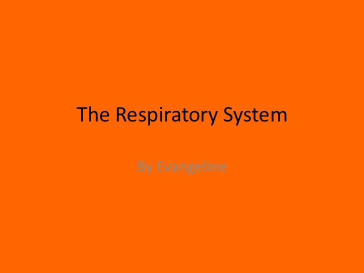The Respiratory System <br />By Evangeline<br />