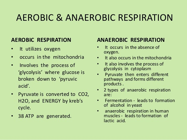 Differences Between Aerobic And Anaerobic Respiration ...