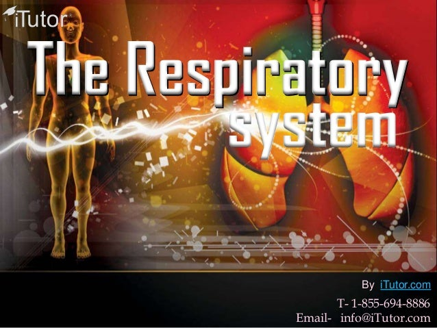 The RespiratorysystemT- 1-855-694-8886Email- info@iTutor.comBy iTutor.com