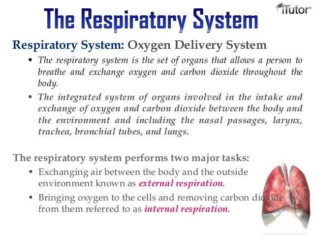 the respiratory system, Cephalic Vein