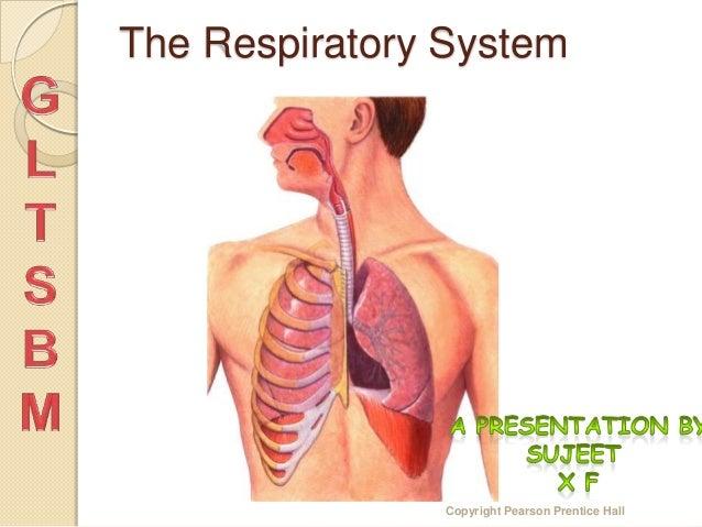 The Respiratory System                Copyright Pearson Prentice Hall