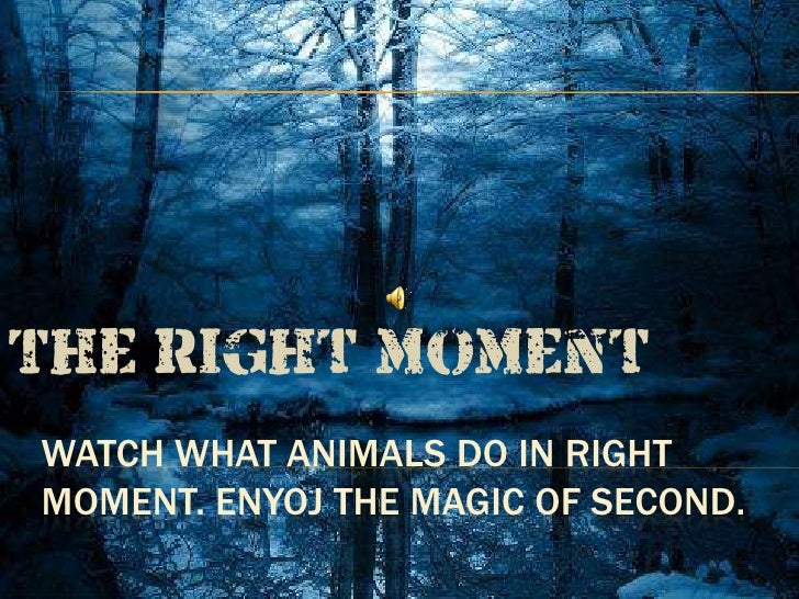 The right momentWATCH WHAT ANIMALS DO IN RIGHTMOMENT. ENYOJ THE MAGIC OF SECOND.