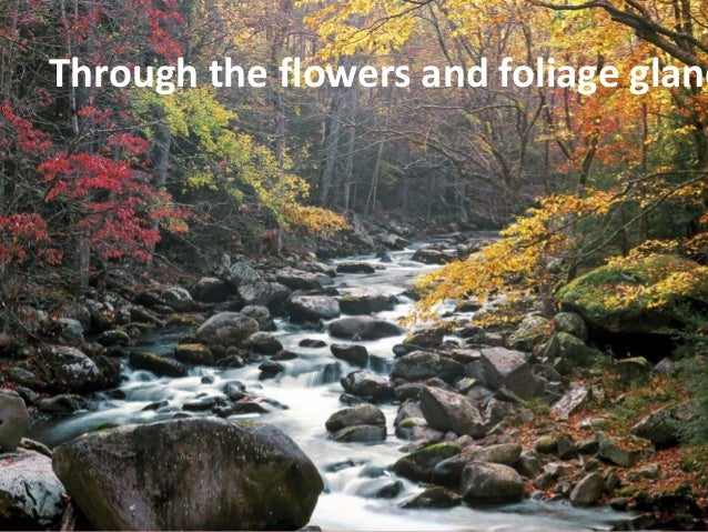 Through the flowers and foliage glancing