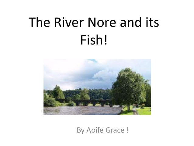 The River Nore and its Fish! By Aoife Grace !