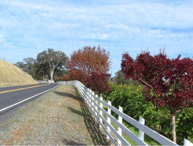 The road by todd vatalaro