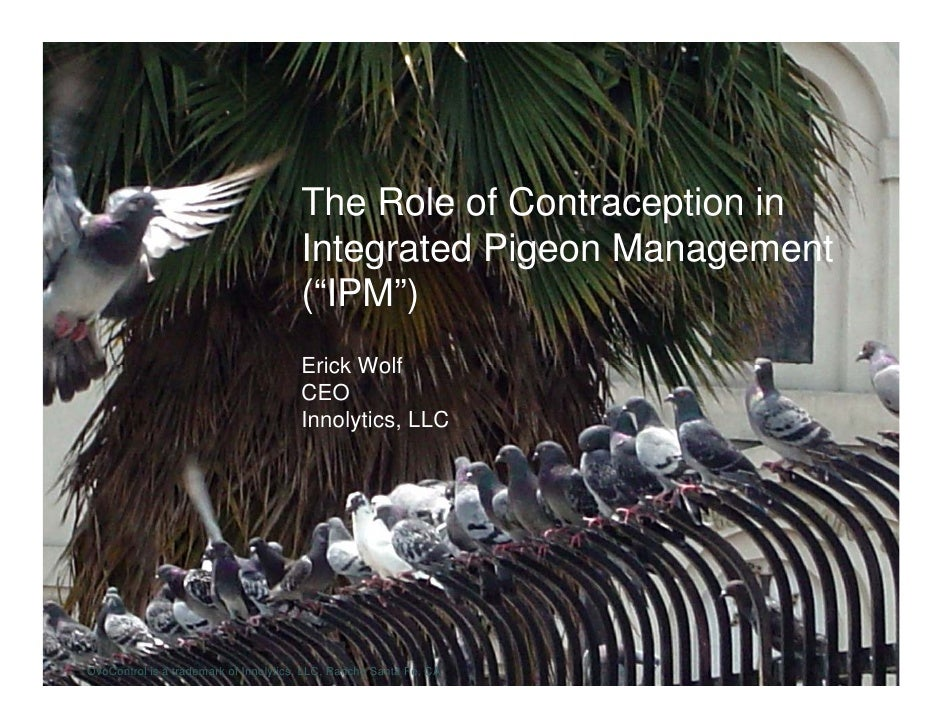 The Role of Contraception in                                        Integrated Pigeon Management                          ...