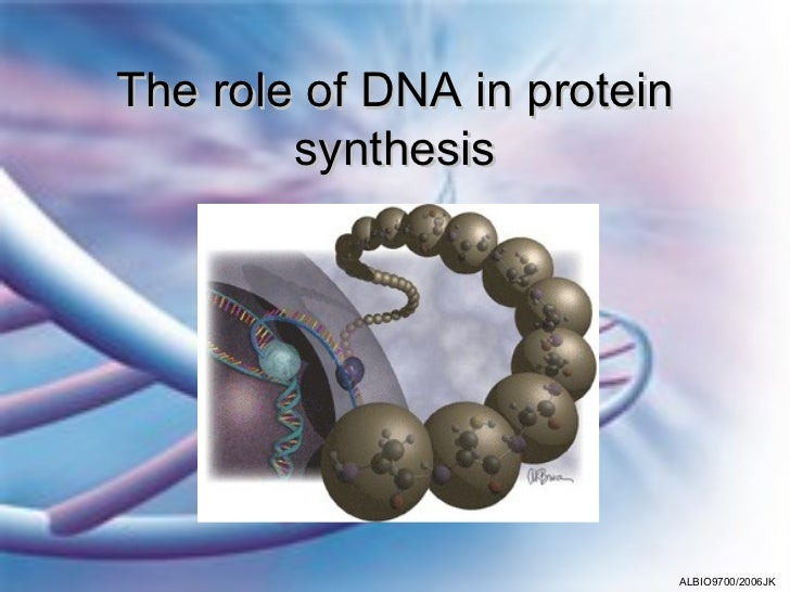The role of DNA in protein        synthesis                             ALBIO9700/2006JK
