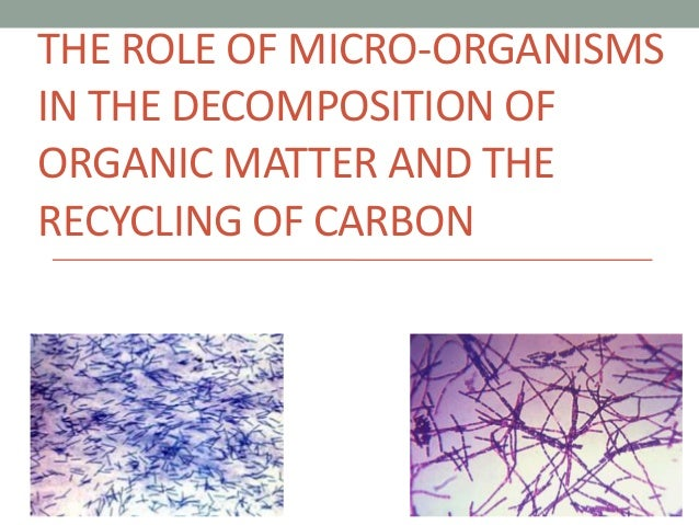 Radiocarbon dating of organic materials