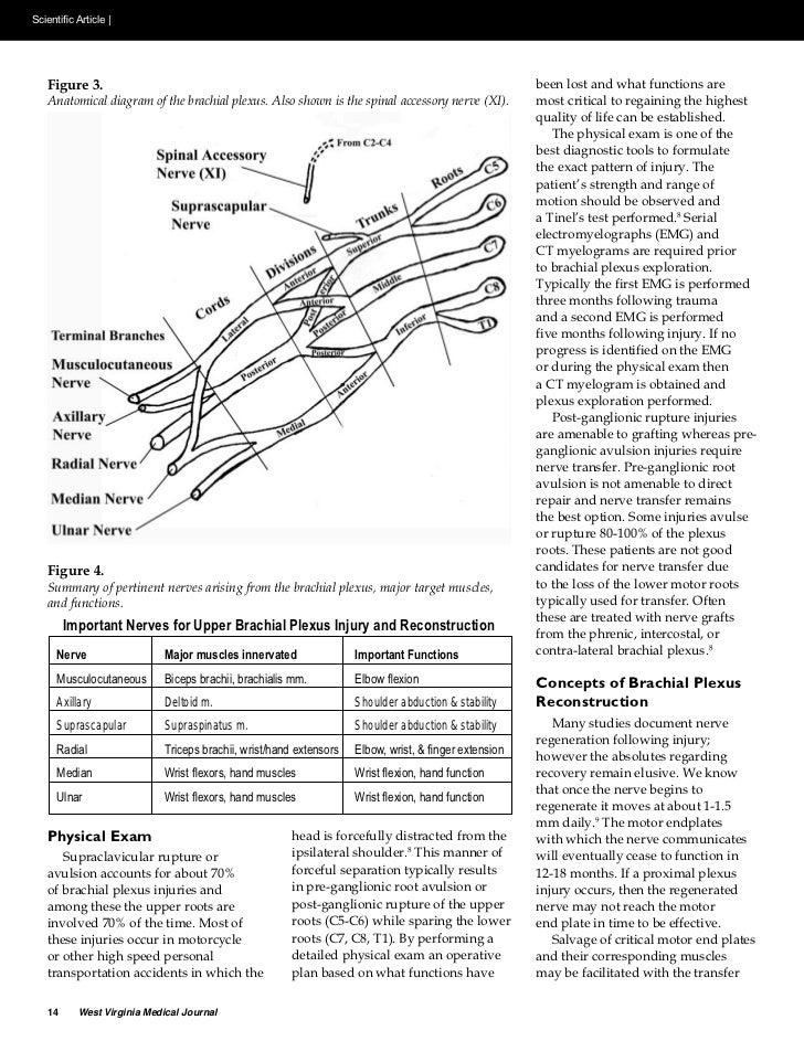 C5 C6 Nerve Transfers for Brachial Plexus Injury