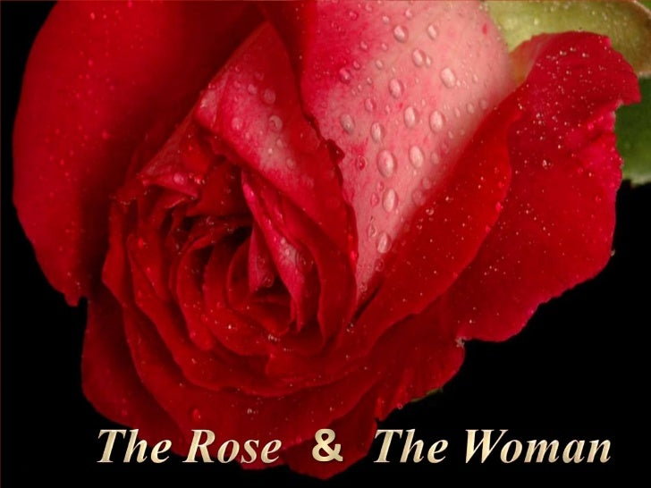 The Rose<br />&<br />The Woman<br />