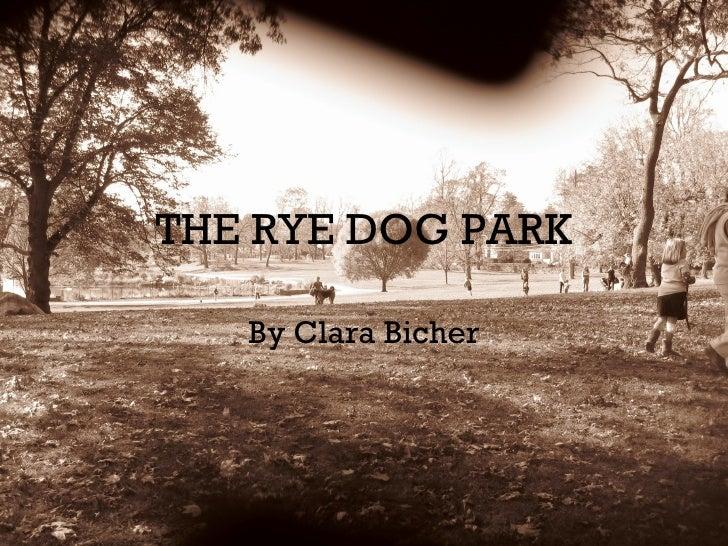 THE RYE DOG PARK By Clara Bicher