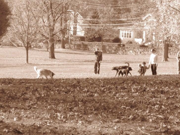 The Rye Dog Park Slide 2