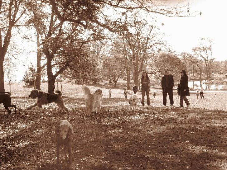 The Rye Dog Park Slide 3