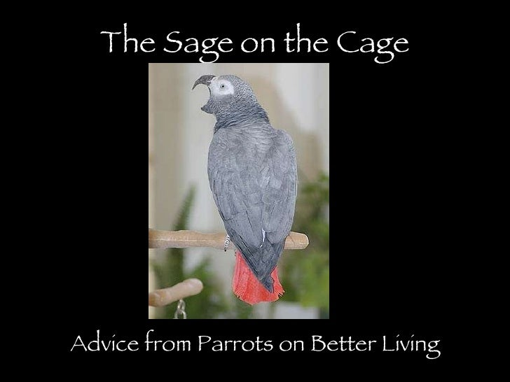 The Sage on the Cage Advice from Parrots on Better Living