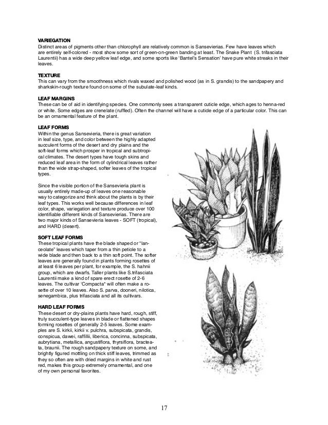 The Sansevieria Book - by Hermine Stover