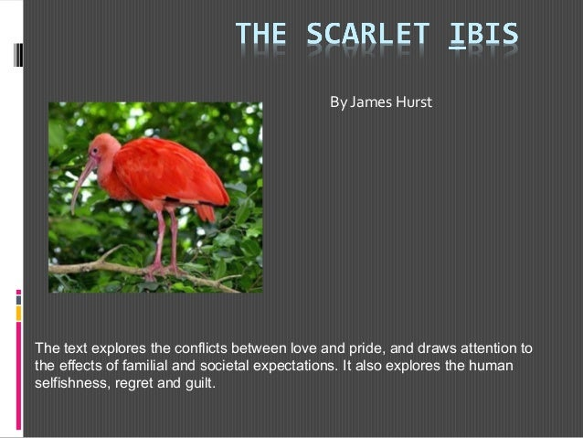 scarlet ibis analysis essay Literary analysis essay scarlet ibis write a comparison and contrast essay writing about the similarities and differences between the movie.
