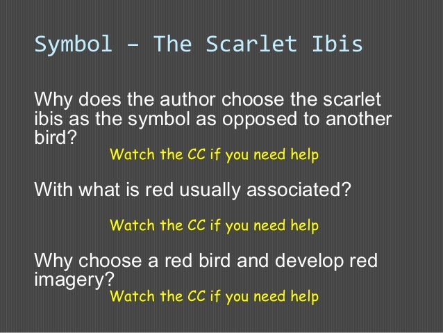 the scarlet ibis introductioninlms 32 why does the author choose the scarlet ibis as the symbol