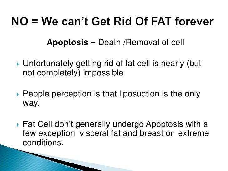 Fat loss equipment