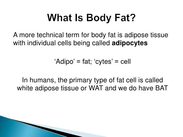 Fat Burn Programs On Treadmill