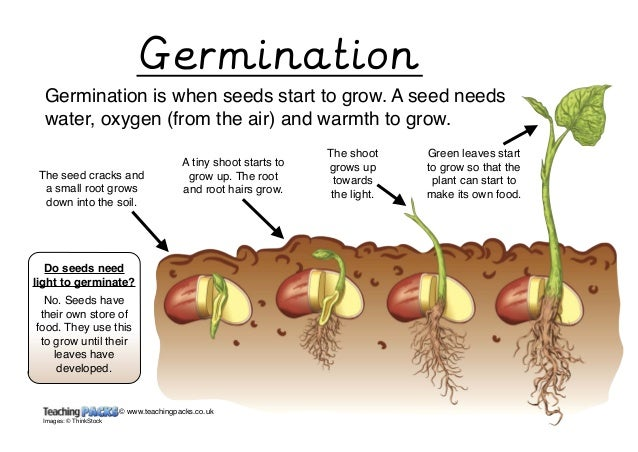 how long to germinate seeds in water