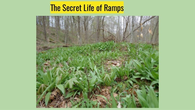 The Secret Life of Ramps