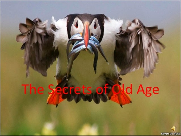 The Secrets of Old Age