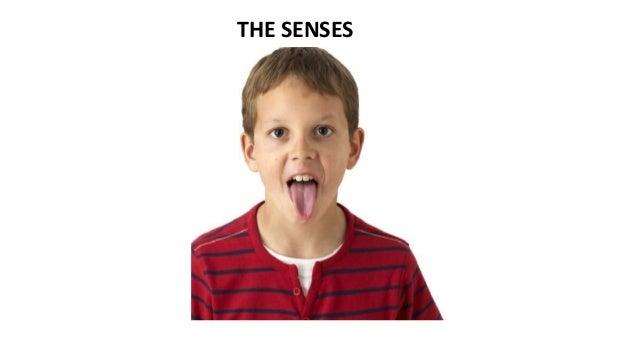 THE SENSES  The SENSES