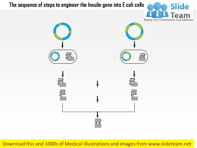 The sequence of steps to engineer the insulin gene into e coli cells medical images for power point Slide 2