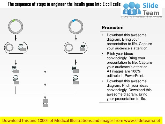 The sequence of steps to engineer the insulin gene into e coli cells medical images for power point Slide 3