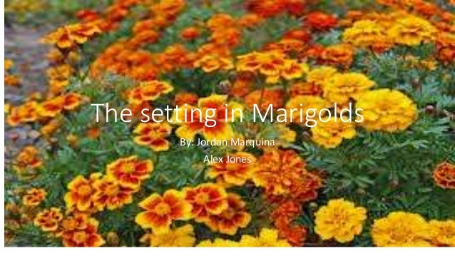 The setting in Marigolds  By: Jordan Marquina  Alex Jones